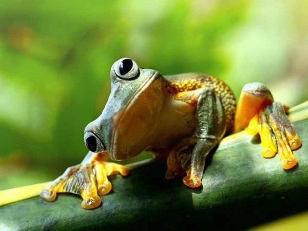 Mơ thấy con ếch đánh con gì
