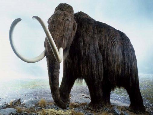 Tổng hợp con số  may mắn từ giấc mơ thấy con voi
