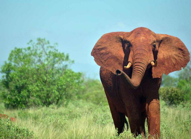 Mơ thấy con voi điềm báo gì