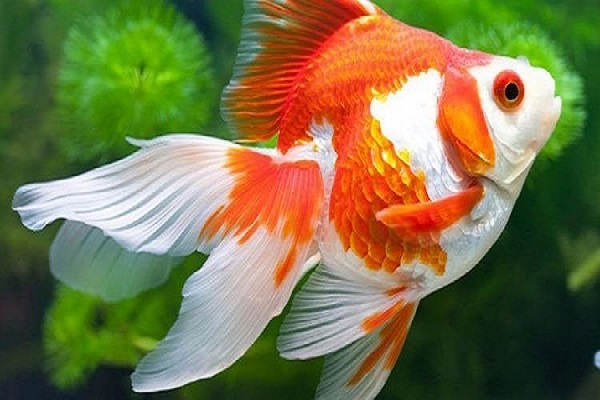 Nằm mơ thấy cá đánh con gì