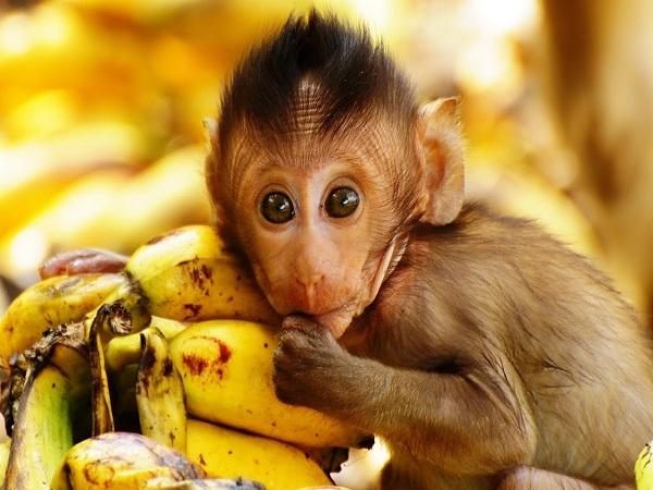 Nằm mơ thấy khỉ đánh con số gì