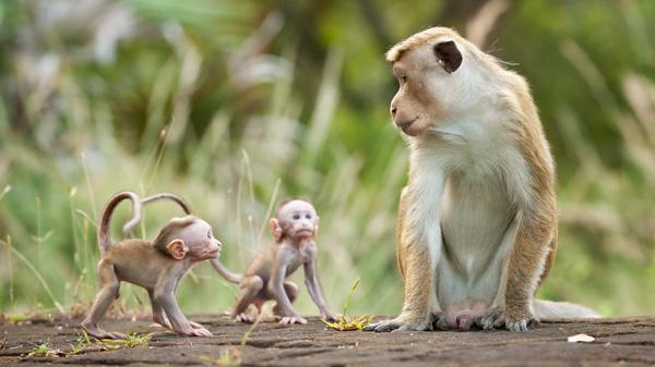 mo thấy khỉ điềm báo gì