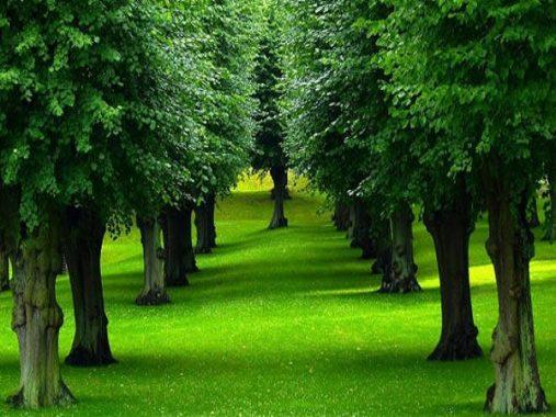 Mộng mơ thấy cây điềm báo gì và đánh con số nào