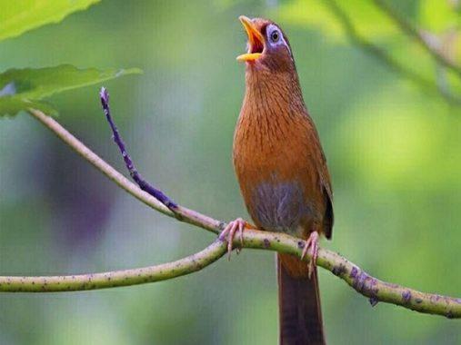 Mộng mơ thấy chim điềm báo gì và đánh con số nào chuẩn nhất