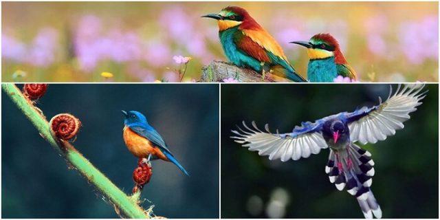 mo thay chim diem bao gi