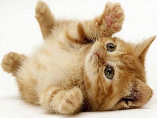 Mộng mơ thấy mèo điềm báo gì và nên đánh con số đề nào