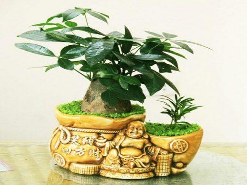 Một số loại cây phong thủy giúp gia chủ hút tài lộc