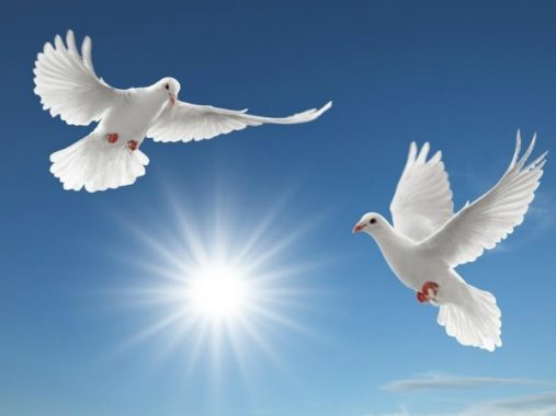 Nằm mơ thấy đôi chim bồ câu có ý nghĩa gì với cuộc sống