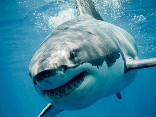 Chiêm bao thấy cá mập mang đến may mắn gì về con số đề
