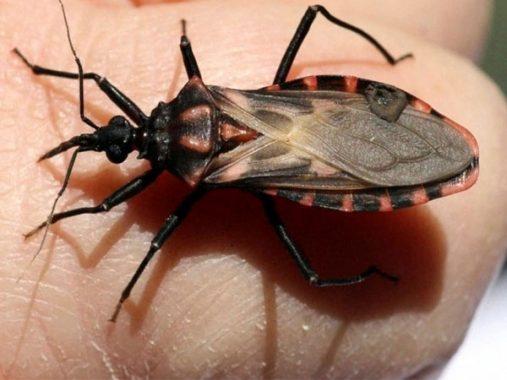 Mơ thấy bọ xít có ý nghĩa gì? đánh đề con bao nhiêu?