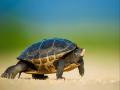 Mơ thấy Rùa đánh con gì? Nằm mơ thấy Rùa là điềm báo gì?
