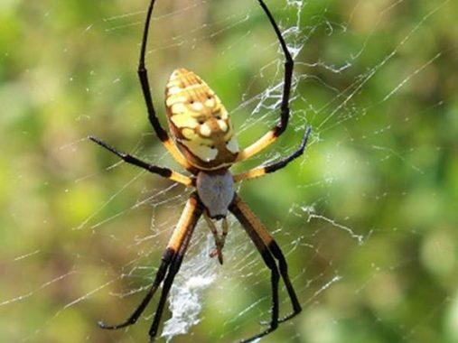 Mơ thấy nhện đánh con gì, mang đến điềm lành hay dữ?