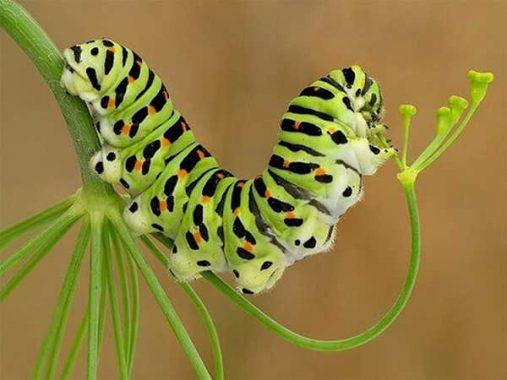 Mơ thấy sâu bọ là điềm gì, đánh đề con gì chắc trúng ?