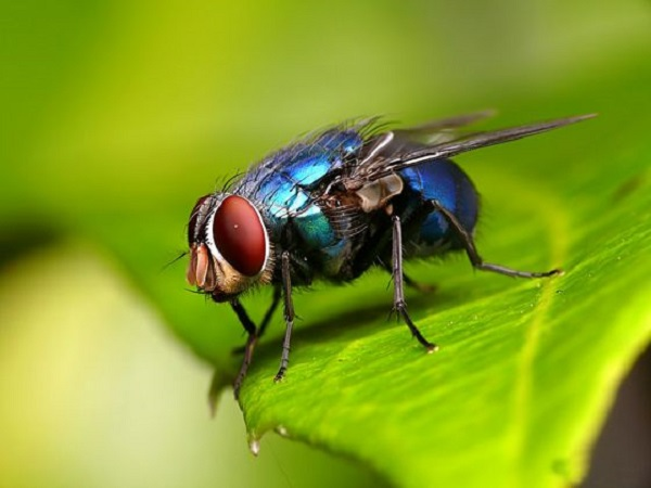 Mơ thấy con ruồi đánh đề số mấy? Chiêm bao thấy ruồi là điềm báo gì?